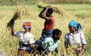 Gambia Will End Rice Imports By 2016