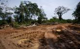 Illegal Logging Poses Threat to Liberian Forests