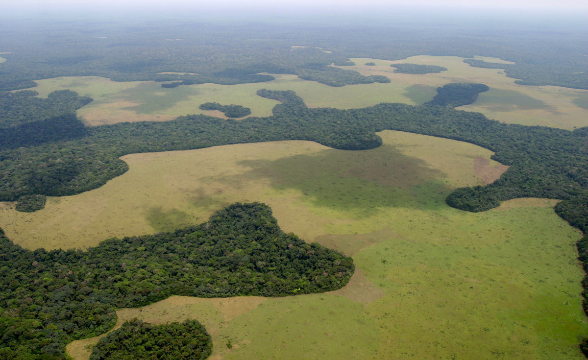 Central Africa Cameroon To Protect Forests With Satellite