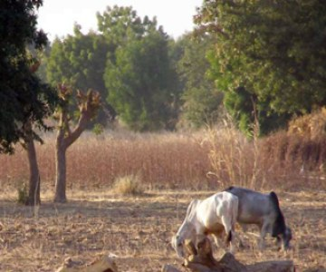 Arid Nigerian Region Turns to Science to Improve Crop Harvests