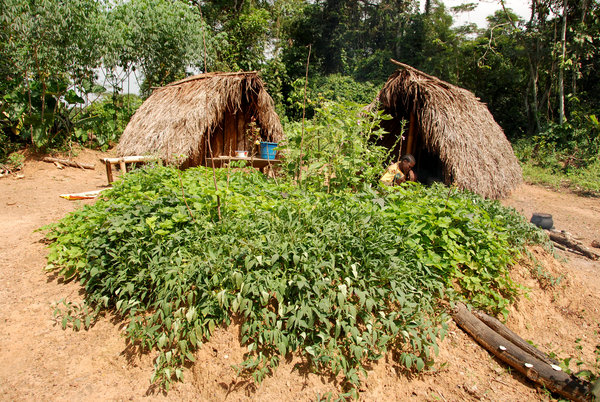 subsistence thesis of west africa South africa should invest in subsistence farming to enable communities to overcome food insecurity, generate income and reduce the risk of contradicting 'avoidable' diseases.