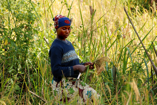 essay on subsistence Phdessay is an educational resource where over 40,000 free essays are collected scholars can use them for free to gain inspiration and new creative ideas for their writing assignments read more.