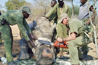 The number of rhinos that are being poached has increased.