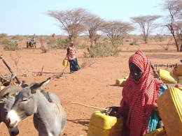 In the drought-ravaged Gedo region of Somalia, obtaining water can involve treks of 12.5 miles or more. (Photo Courtesy of Mohamed Gaarane/IRIN)