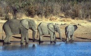 Elephants in the evening, Hwange, Zimbabwe.