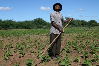 A Madagascan farmer keeps his eyes on the weather.