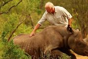 Wildlife veterinarian Dr Jacques Flamand helps a rhino.