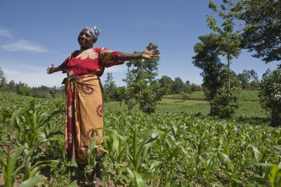 Without addressing these root causes, however, food security will persist in Africa.