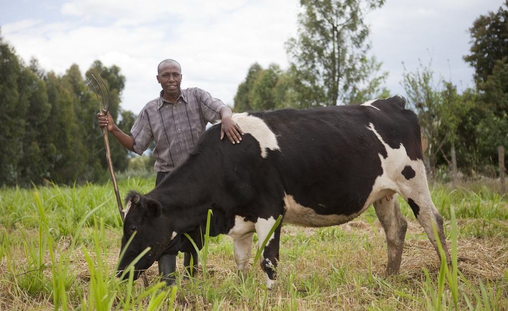 a discussion of livestock disease and african food security African livestock diseases but this outcome story is one in a series that reports on research supported by the canadian international food security research.