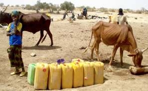 Nearly 25 Million Food Insecure in Sahel