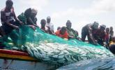 President Sall Urged to Save Fish