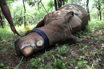Rhino poaching is on rise in Africa. (File Photo)