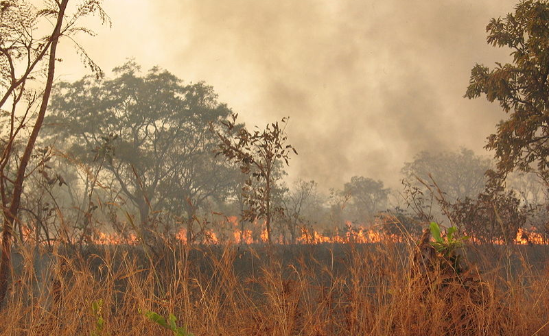 bush burning and sustainability If properly done it is sustainable and doesn't  after which time the bush is  burned and cleared,.