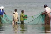 The livelihoods of ocean-dependent peoples are being threatened.