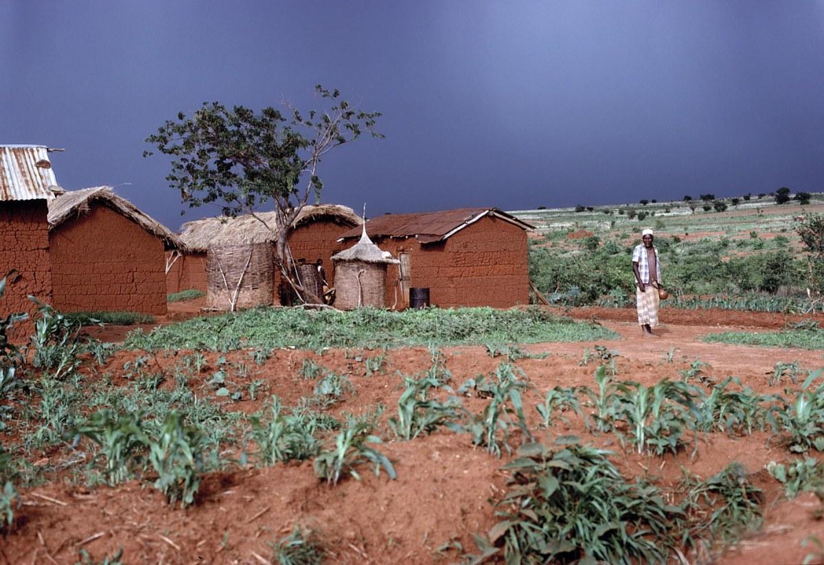 Tanzanian Land Grabbing Essay Paper