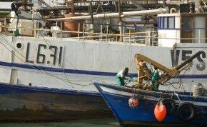 Namibian Govt fears tuna depletion as oil and gas exploration chase fish away thumbnail
