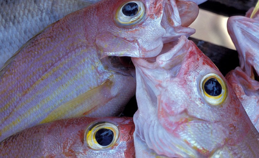 It 39 rained fish 39 in ethiopia report for Fish on main