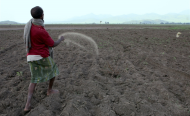 Crop Failures Will Test Agricultural Overhaul in Ethiopia
