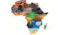 African Experts in Talks for a Continental Free Trade Agreement