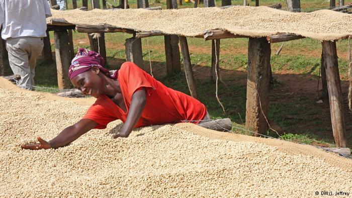 Analysis of the coffee industry in ethiopia