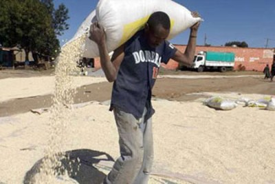 Malawi is requesting for maize in the wake of a severe food shortage following a prolonged dry spell (file photo).