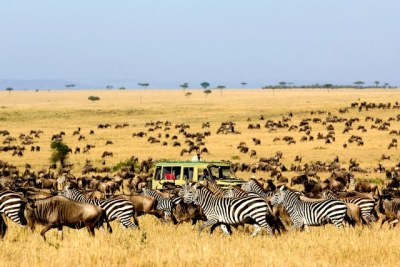A view at one of Tanzania National Parks.