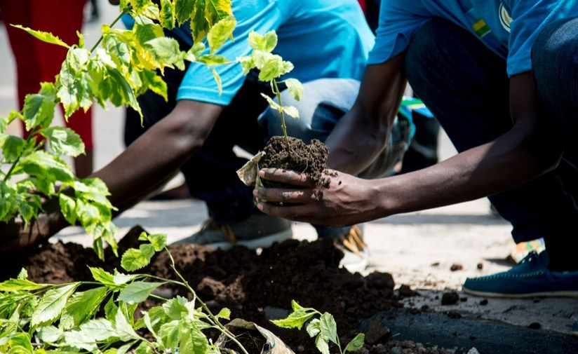 Africa: Fighting Climate Change One Tree at a Time - Why We Need Reforestation