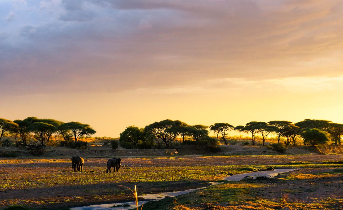 Tanzania: Tanzania Ranked 10th On the List of Growing Tourism Markets