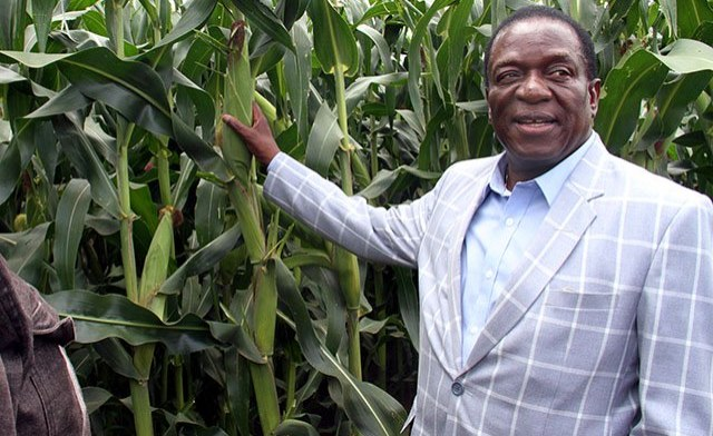 Zimbabwe: Govt Restructures Command Agriculture Financing Model