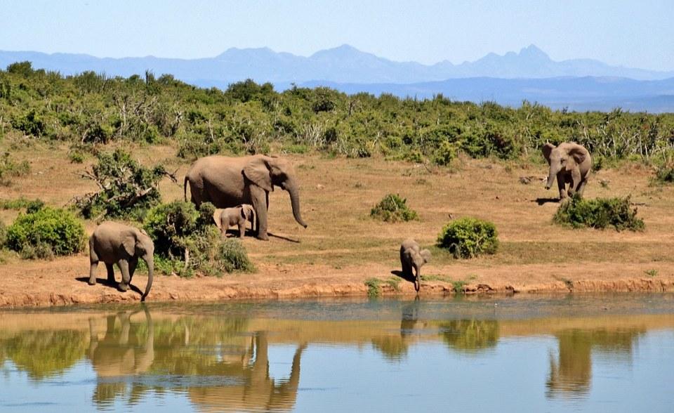 Namibia: Elephants Continue to Cause Destruction