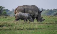 Breakthrough as Police Nab Rhino Poachers