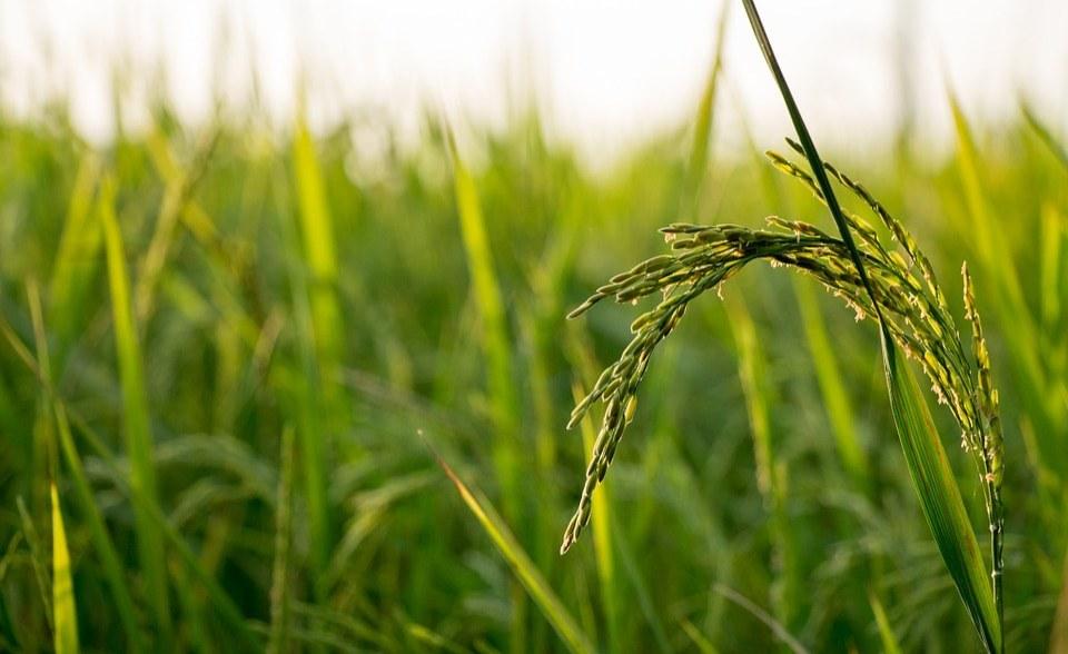 Nigeria: Govt Inaugurates $129.17 Million Scheme to Address Food Insecurity