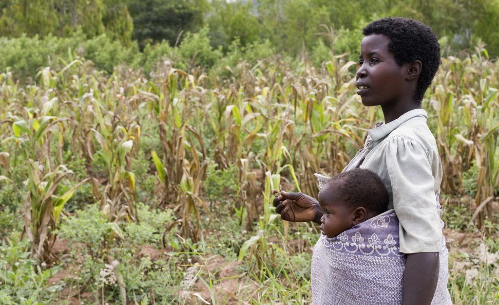 Africa: Netflix-Inspired Tools Can Reap Rewards for Farmers, Says Nobel Winner