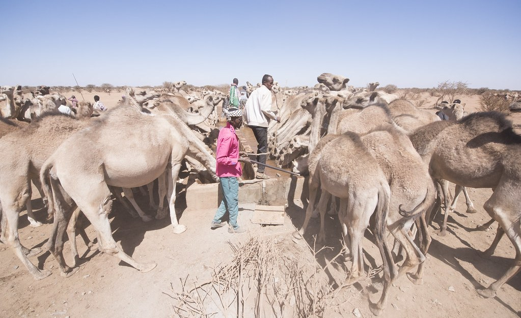 Somalia: Mobile Phone Warnings Set to Aid Climate-Vulnerable Somali Nomads - AllAfrica - Top Africa News