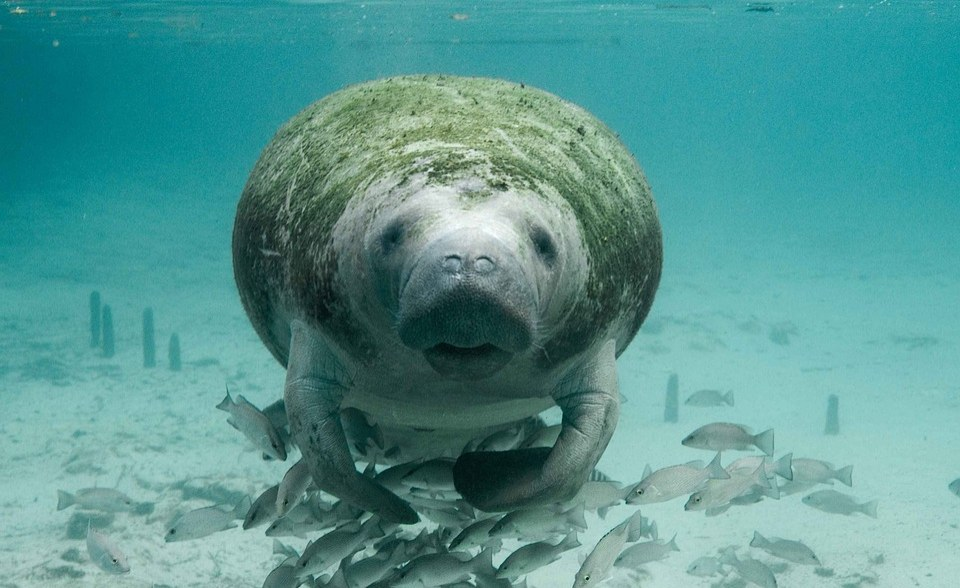 Nigeria: Environment Minister, Others Condemn Torture of Manatee in Delta