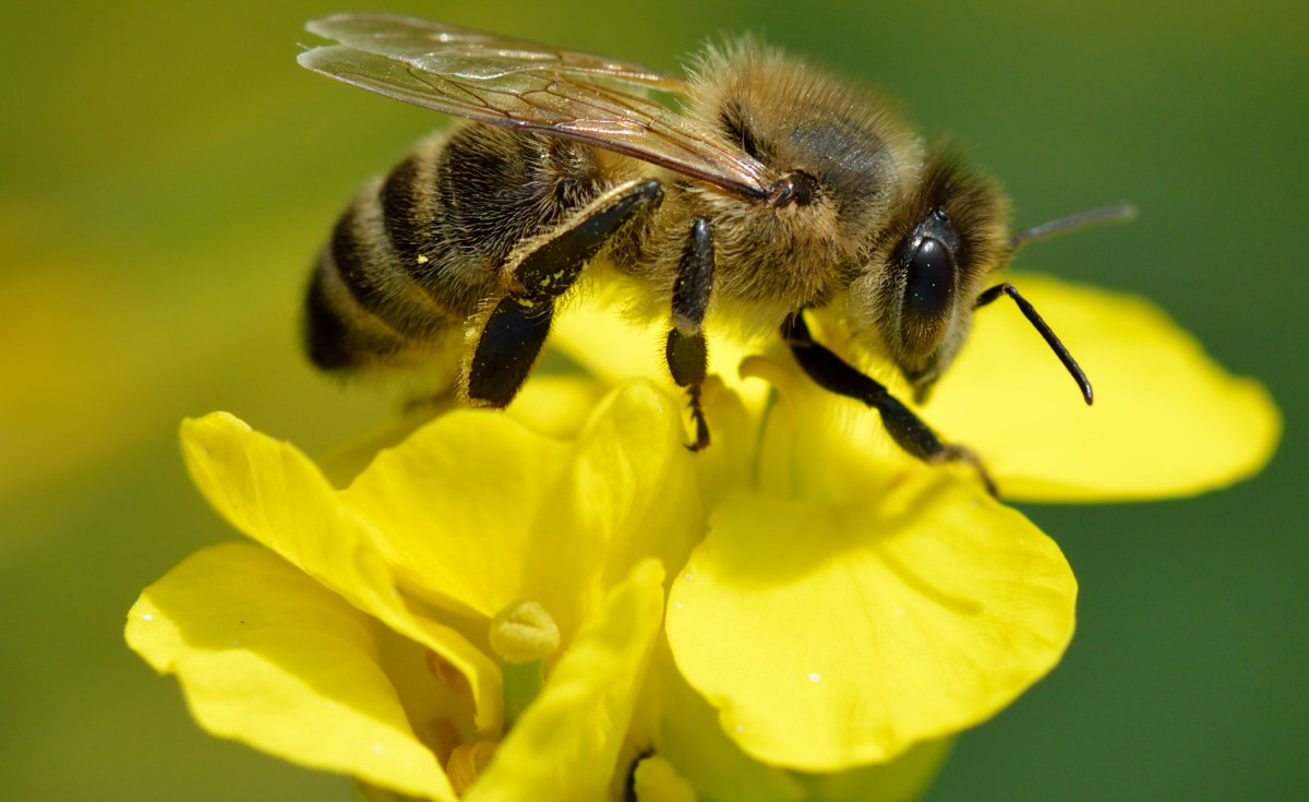 Africa: Lessons From Continent On How to Build Resilient Bee Colonies
