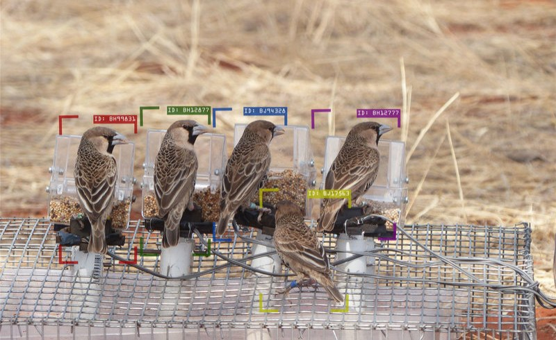 South Africa: AI Trained to Study Individual Birds in Wild Populations